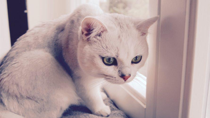 文句言うのに諦めてない?その猫背、まだ治るかも。
