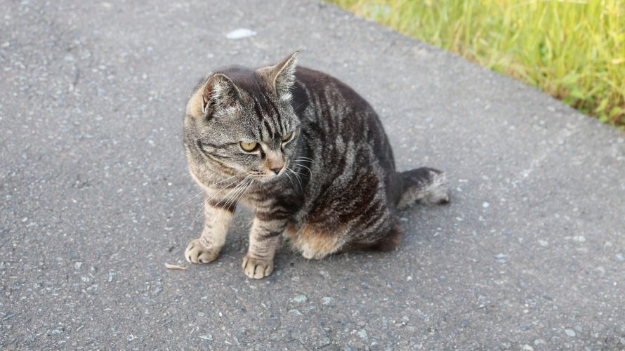 自分は違うと思ってない?一瞬でできる猫背チェックやってみて!